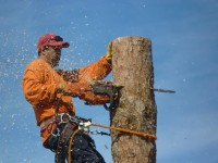 Affordable Tree Service Tree Removal