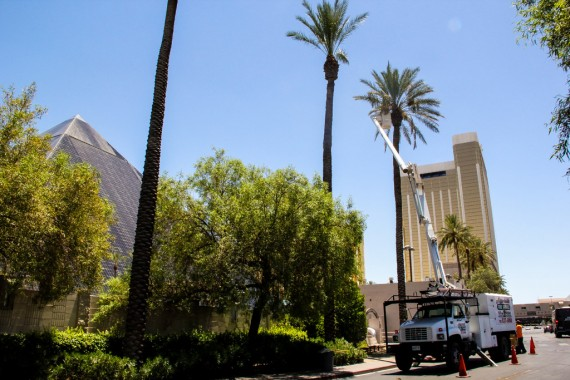 Affordable Tree Service @Luxor
