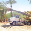 Affordable Tree Service Spade Truck