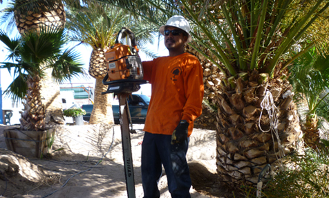 tree service in Las vegas