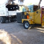 Affordable Tree Service Equipment