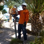 Affordable Tree Service Crew Member Tree Trimming