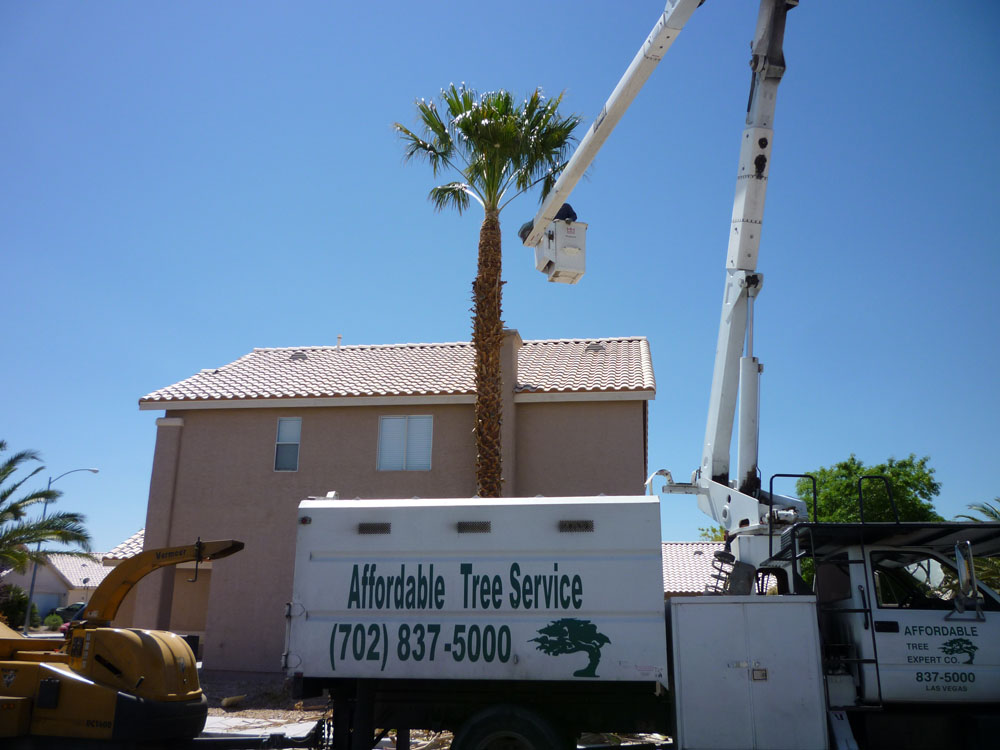 Boom Truck Palm Tree Trimming