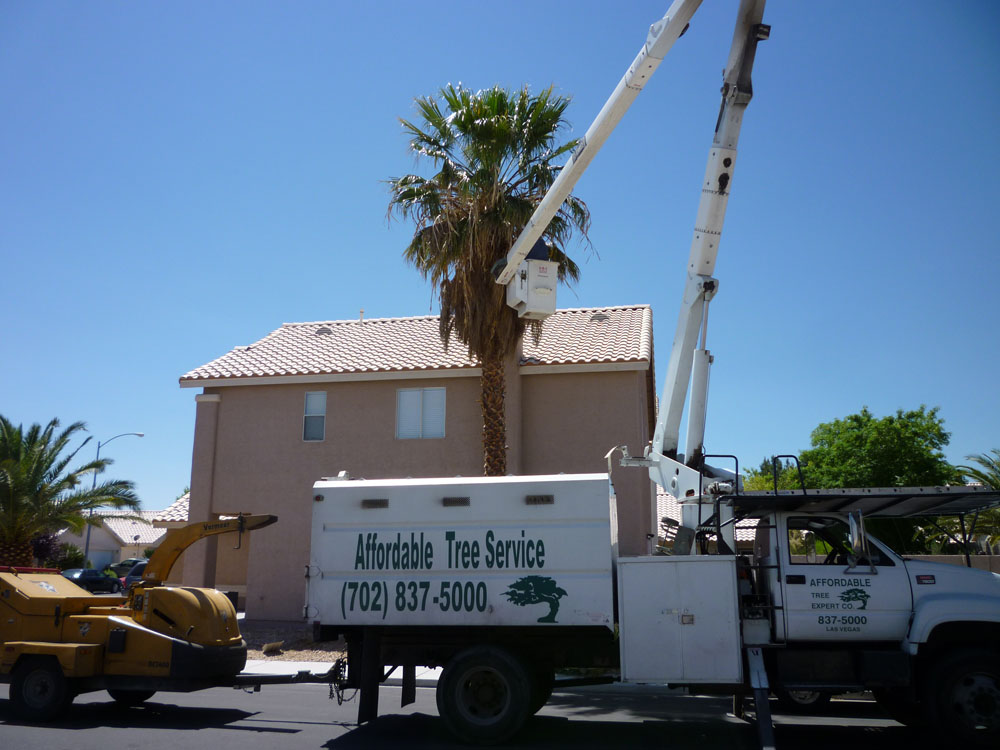 Boom Truck Palm Tree TrimmingBoom Truck Palm Tree Trimming