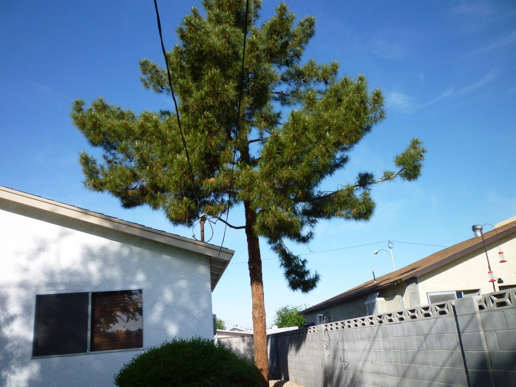 Tree Removal 171 Affordable Tree Service Las Vegas Nv
